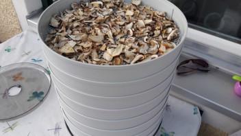 Pilzpulver zubereitung und verwendung Pilzrezepte und